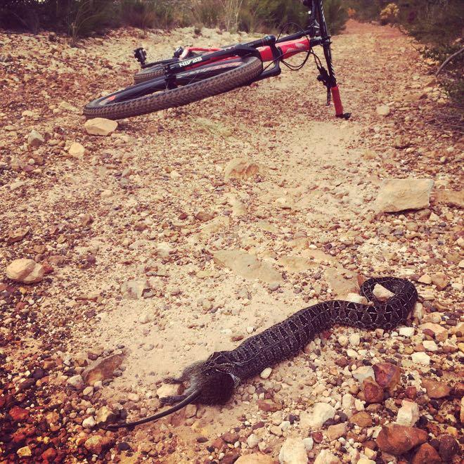 Conrad Stoltz Caveman Berg Adder snake eating mouse
