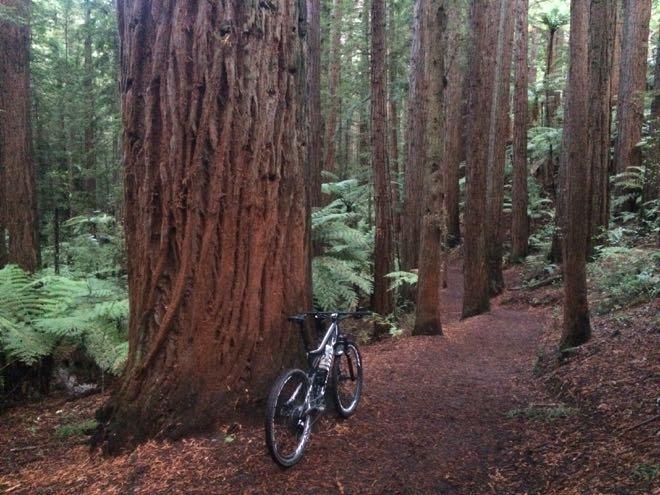 Conrad Stoltz Rotorua Redwoods